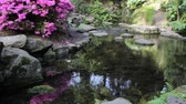 kwiaty : Waterfall with Azalea Flowers, Rocks, Ferns and Moss Water Reflection in Crystal Springs Rhododendron Garden Portland Oregon