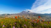 Time lapse of white clouds and blue sky with colorful flowers blooming over Mount St. Helens summer season in Washington State 4k UHD 3840x2160
