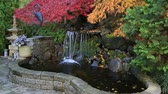 High definition zooming out video of red and green laced maple trees over water feature in backyard brick patio garden in colorful autumn season 1920x1080 HD Dostupné videozáznamy