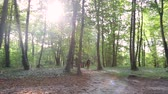 Sunflare in the forest 2