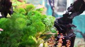waterplant : Beautiful aquarium with fishesStock video: