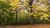 windy : Beautiful Autumn in the park, Coatbridge, Scotland