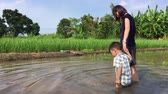 years : Modern Mother walk her son in a paddy field for Nature learning educational program. Agriculture Educational program is very famous among parents as their child learn to live in nature. Stock Footage