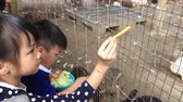 Asian Kids are feeding Rabbits in a cage.