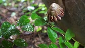 molusco : Snail is climbing up the flower pot in a garden