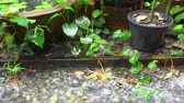 Raining falling on water pond home garden