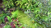 красочный : video of home Green garden pond full of tree