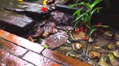 makro : Slow motion Water Splah on garden side walk on rainy day Stok Video