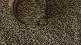 green coffee beans : Green Coffee Bean Sampler Vintage Origins Selections