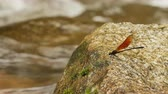 стрекоза : Dragonfly on a rock in a waterfall