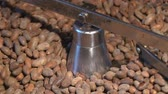 derramar : Worker roasting cocoa beans in a chocolate making factory