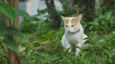 gato : A cat looking at camera on the grass background. Archivo de Video