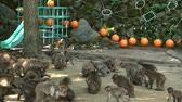 macaco : This is a mountain called Takasakiyama, Here, the wild monkey gathers at the feed station to eat food, there are also many baby monkeys born in the spring, it is a popular tourist destination.wild Japanese monkey in Oita, Japan