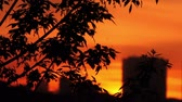 back lit : Silhouettes of tree branches illuminated from behind and blurred silhouettes of houses at sunset