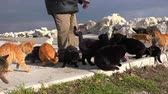 lovable : Man gives food to street cats, 21.01.2017, Turkey, Istanbul