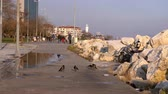 Turkey, Istanbul - January 21, 2017: City park on the coast of the sea in the area of Floria after the rain. Dostupné videozáznamy