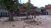 cascalho : Pigeons on the Bascarsija square in Sarajevo,  29.06.2015,  Bosnia and Herzegovina, Sarajevo Stock Footage
