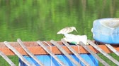 garça : A little gray heron is fishing from a river on a pier.