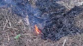 air quality : Fire flame burning dry grass in forest, the air is polluted with smoke. Fire, close-up. Deforestation environmental Stock Footage