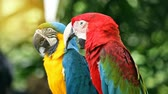 empoleirar : Blue and Yellow macaw