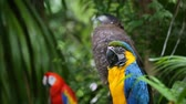 empoleirado : Blue and Yellow macaw