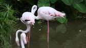 ornitologie : Group of flamingo bird at park