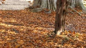 остатки : Fallen leaves alight: high speed photography  Стоковые видеозаписи