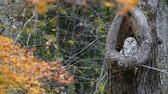 расцвет : Autumn forest and OWL
