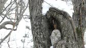 порошкообразный : Super slow motion: wild bear the cold in the forest snow OWL