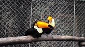 trees : Toucan play in the cage.