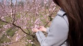 cherrytree : A girl by the tree of a blossoming peach. A branch of a flowering fruit plant in the hands of a girl.