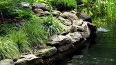 естественно : Garden waterfall. Garden pond with water flowers. Beautiful pond in a backyard surrounded by stone during.