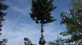 Tall tree in a rural area Wideo