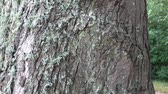 Lichens on tree bark, Lichens are symbiotic fungi and algae.