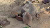 fazer : Rodents eating food in a ceramic bowl in a garden