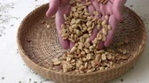 kernels : Many peanuts. There are nuts in the basket