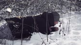 sprookjesbos : guy in black jacket crawling on the snow as a soldier in midst winter forest Stockvideo