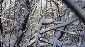 sprookjesbos : Snow lies on the branches of trees in the forest. A beautiful winter tale Stockvideo