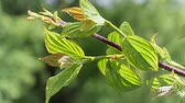taze : Green leaf with raindrops in the summer in nature develops in the wind