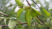 trawnik : Green leaf with raindrops in the summer in nature develops in the wind