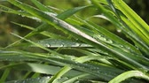 gardens : Grass in the rain Stock Footage