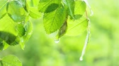 para cima : Green leaf with raindrops in the summer in nature develops in the wind