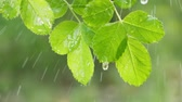 质地 : Green leaf with raindrops in the summer in nature develops in the wind