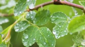 çevre : Green leaf with raindrops in the summer in nature develops in the wind