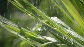 penge : Green grass in nature with raindrops