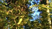entrar : Trees in Forest Stock Footage