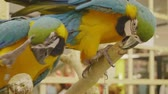 affetto : Close-up feeding Parrot,Colorful Macaw