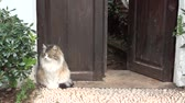 tomcat : Cat attacked by dogs Stock Footage