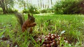 a cute little squirrel eating nuts from a big pile of nuts