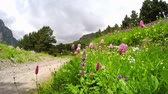 Beautiful bright wildflowers swaying in the wind in an alpine meadow on the hillside